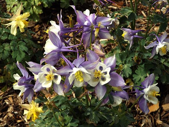 Flower-Fields-Carlsbad-California4