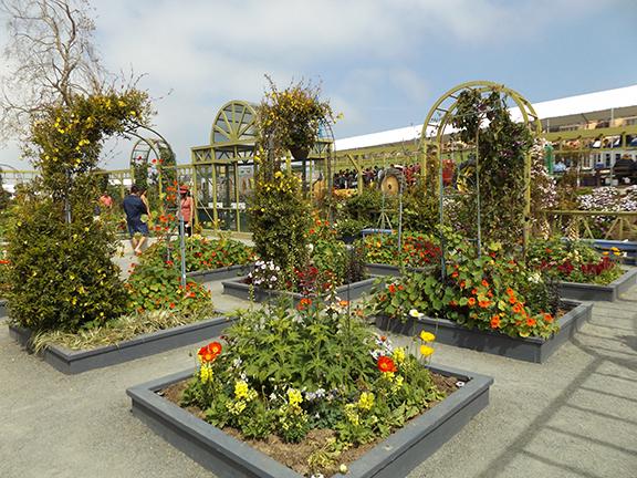 Flower-Fields-Carlsbad-California7