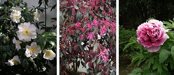 Lan-Su-Chinese Garden-Portland-Oregon14