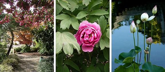 Lan-Su-Chinese Garden-Portland-Oregon16