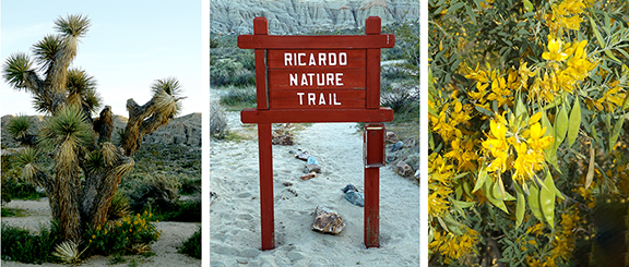 Ricardo-Nature-Trail-Red-Rock-Canyon-State-Park