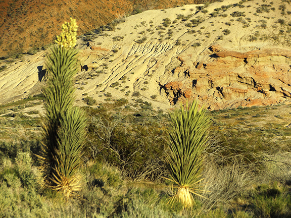 Ricardo-Nature-Trail-Red-Rock-Canyon-State-Park3