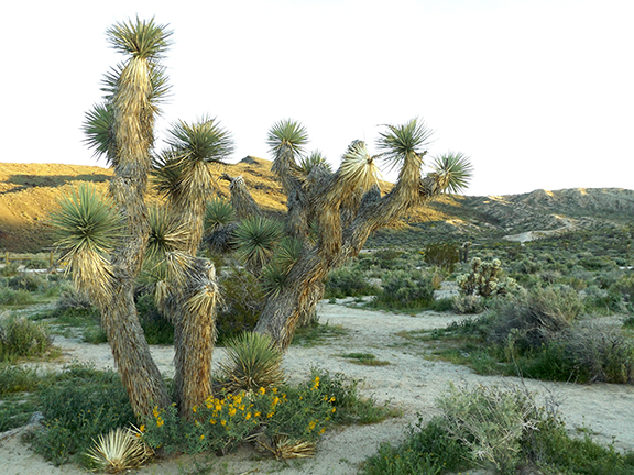 Ricardo-Nature-Trail-Red-Rock-Canyon-State-Park5