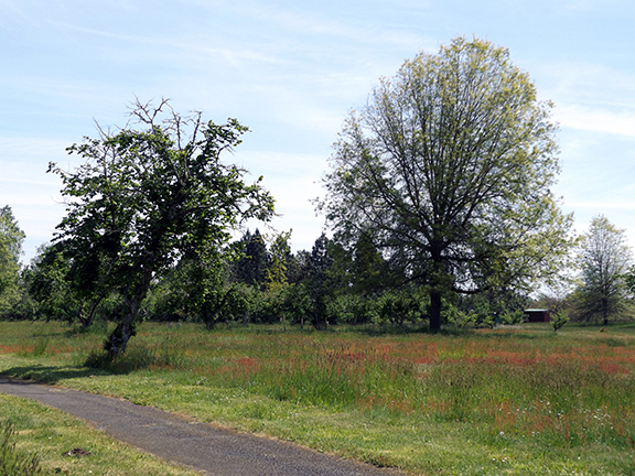 Willamette-Mission-State-Park14