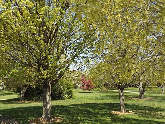 Yakima-Area-Arboretum