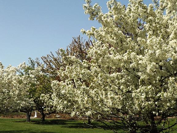 Yakima-Area-Arboretum11