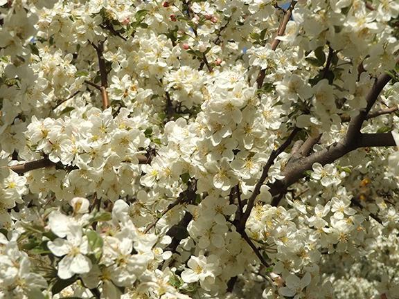Yakima-Area-Arboretum12