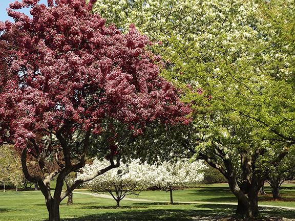 Yakima-Area-Arboretum14