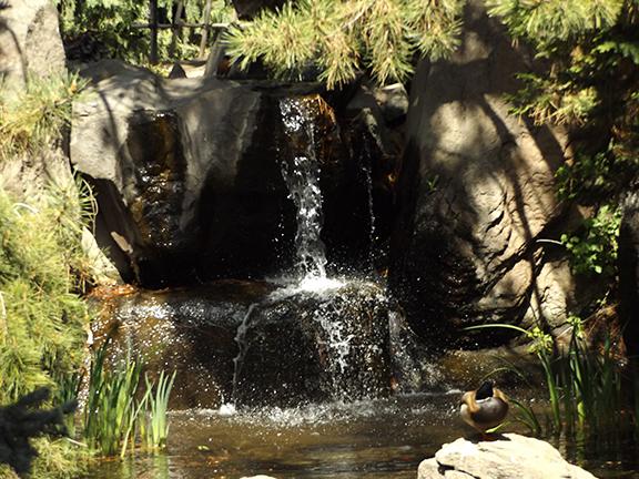 Yakima-Area-Arboretum9