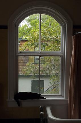 cat-in-bathroom-window-Ernest-Hemingway-House-Museum-Key-West