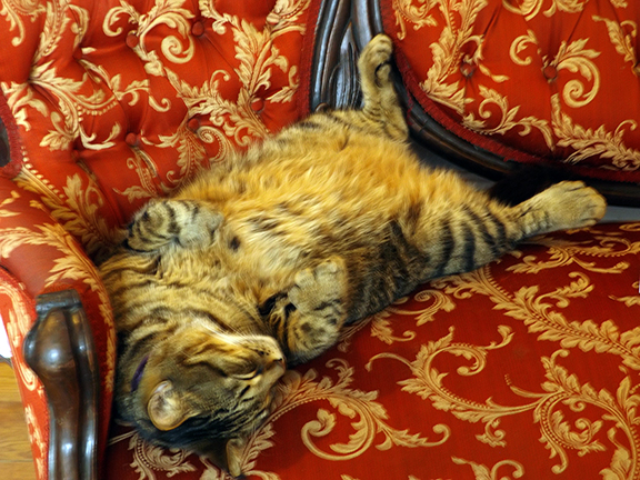cat-on-couch-Ernest-Hemingway-House-Museum-Key-West