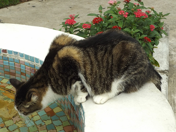 cat-on-fountain-Ernest-Hemingway-House-Museum-Key-West