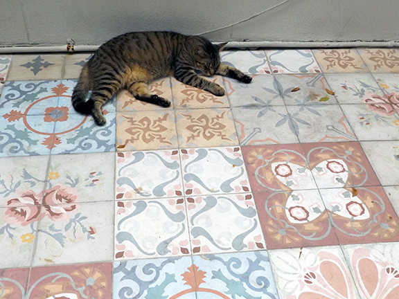 cat-on-tiles-Ernest-Hemingway-House-Museum-Key-West