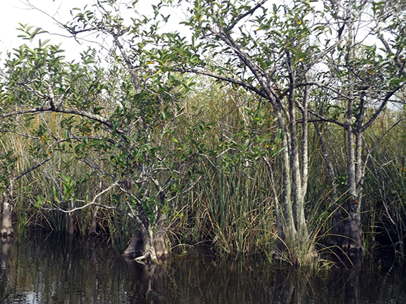Coopertown-Air-Boat-Tours-Everglades5