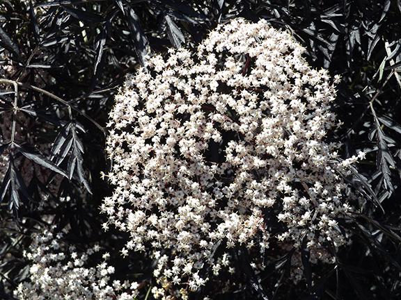 flowers-Whitman-Mission-National-Historic-Site-Walla-Walla