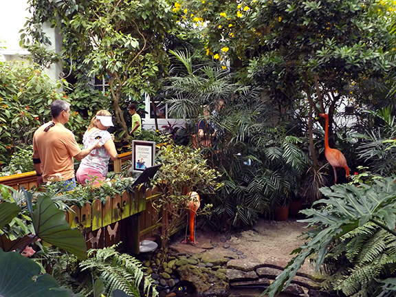 Key-West-Butterfly-and-Nature-Conservatory