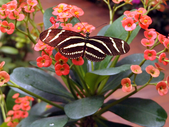 Key-West-Butterfly-and-Nature-Conservatory12