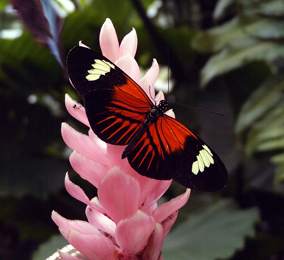 Key-West-Butterfly-and-Nature-Conservatory3