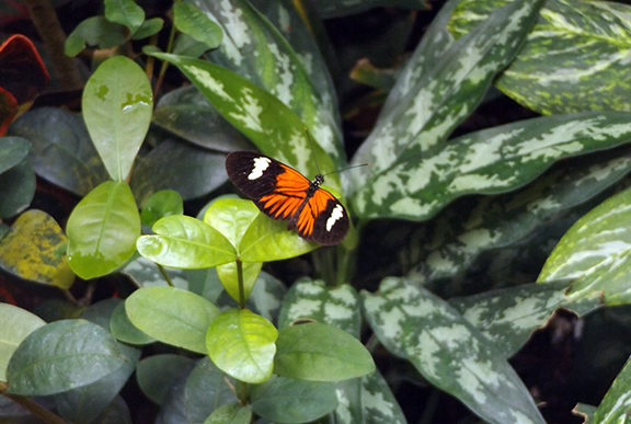 Key-West-Butterfly-and-Nature-Conservatory4