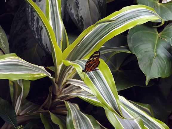 Key-West-Butterfly-and-Nature-Conservatory5
