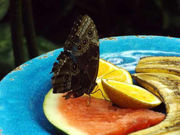Key-West-Butterfly-and-Nature-Conservatory9