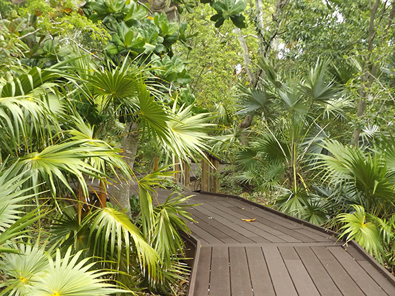Key-West-Tropical-Forest-and-Botanical-Garden5