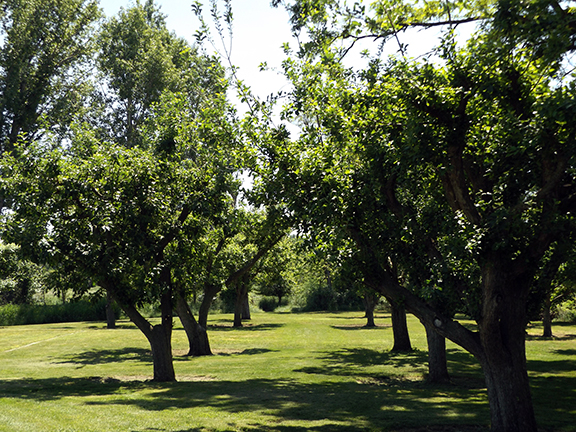 orchard-Whitman-Mission-National-Historic-Site-Walla-Walla