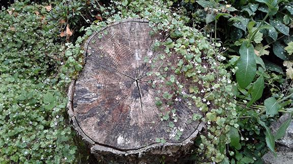 Crystal-Springs-Rhododendron-Garden-Portland10