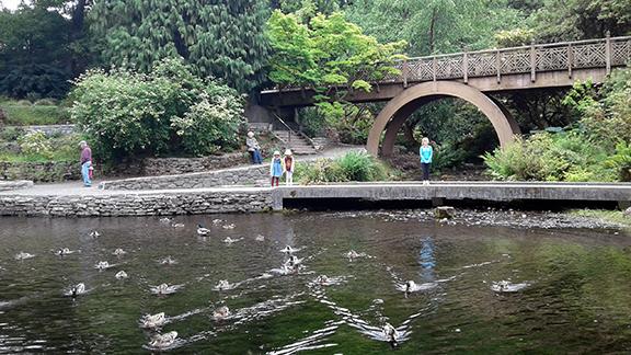 Crystal-Springs-Rhododendron-Garden-Portland11