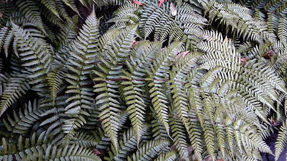 Crystal-Springs-Rhododendron-Garden-Portland13