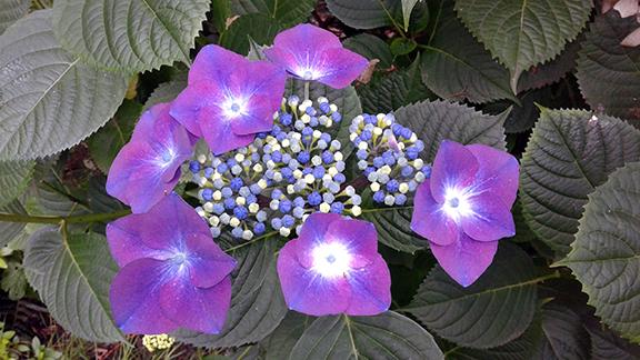 Crystal-Springs-Rhododendron-Garden-Portland14
