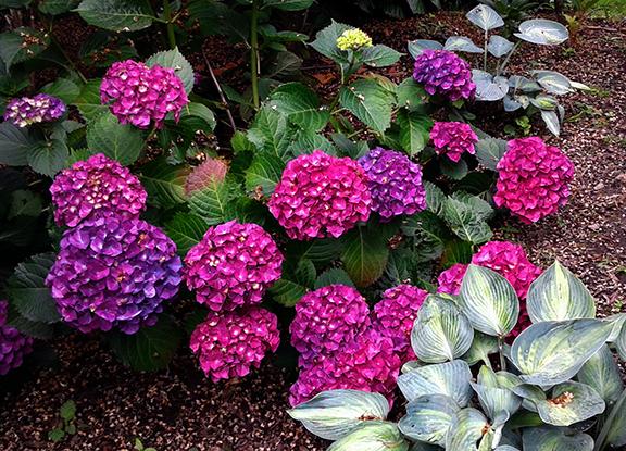 Crystal-Springs-Rhododendron-Garden-Portland15