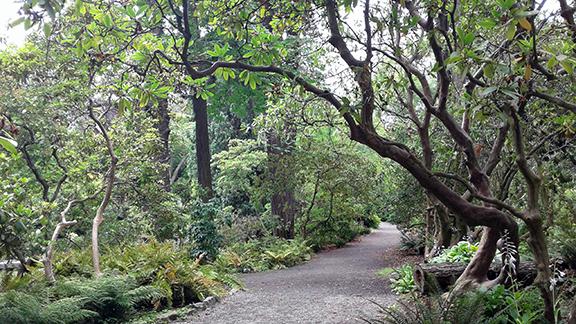 Crystal-Springs-Rhododendron-Garden-Portland17