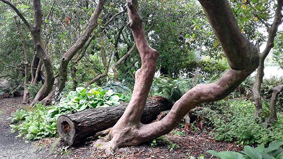 Crystal-Springs-Rhododendron-Garden-Portland18