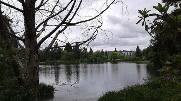 Crystal-Springs-Rhododendron-Garden-Portland20