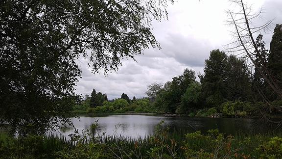 Crystal-Springs-Rhododendron-Garden-Portland21