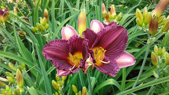 Crystal-Springs-Rhododendron-Garden-Portland23