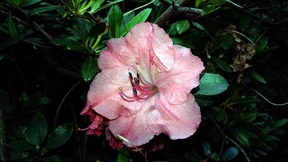 Crystal-Springs-Rhododendron-Garden-Portland4