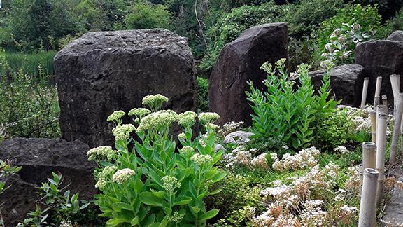 Crystal-Springs-Rhododendron-Garden-Portland7