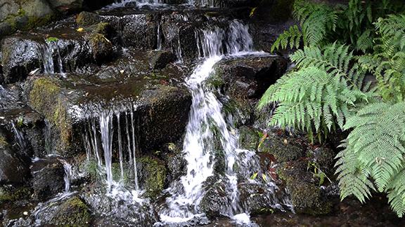 Crystal-Springs-Rhododendron-Garden-Portland9