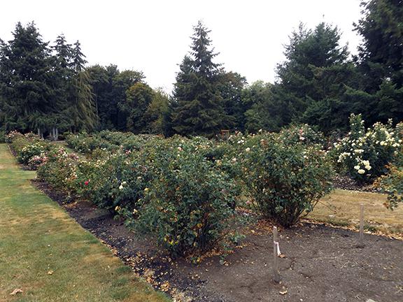 Heirloom-Roses-Saint-Paul-Oregon8