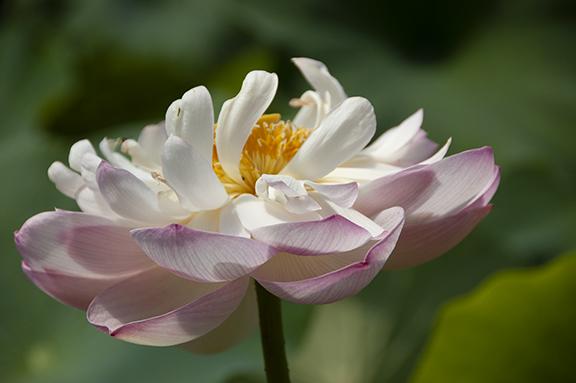 Hughes-Water-Gardens-Tualatin11