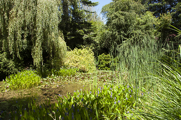 Hughes-Water-Gardens-Tualatin14