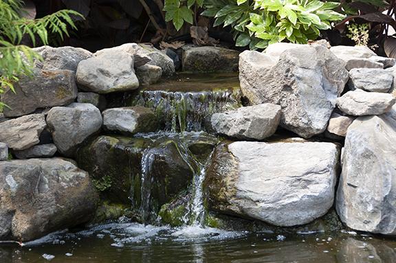 Hughes-Water-Gardens-Tualatin9