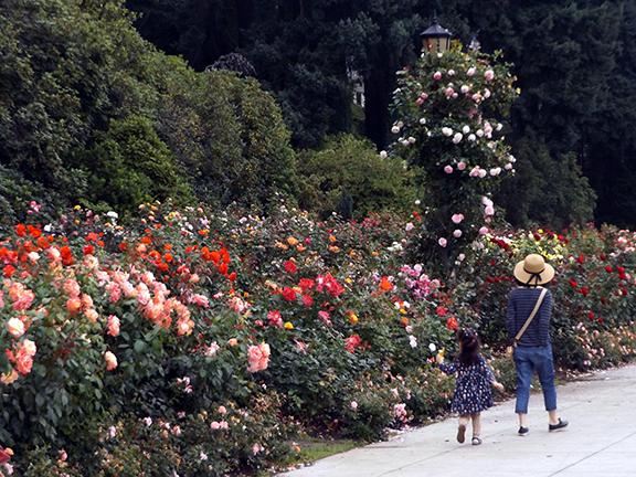 International-Rose-Test-Garden-Portland4