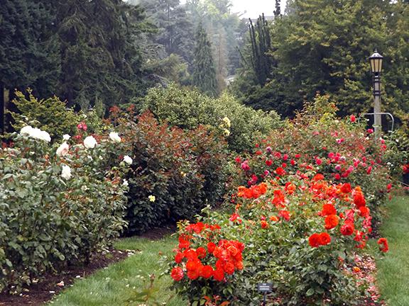 International-Rose-Test-Garden-Portland5