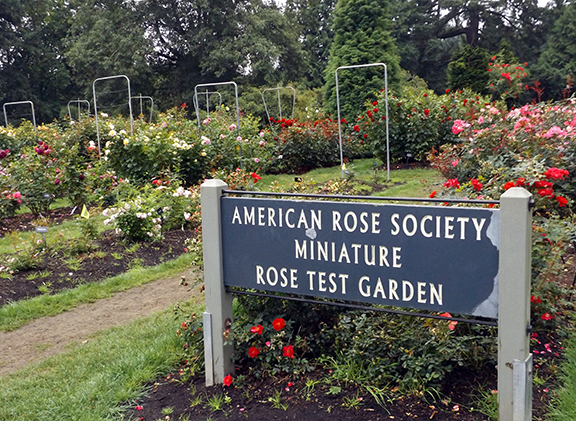 International-Rose-Test-Garden-Portland6