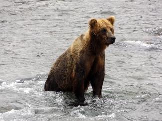Katmai-National-Park-and-Preserve-bear-cub2