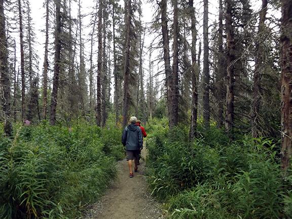 Katmai-National-Park-and-Preserve-Brooks-Falls-trail
