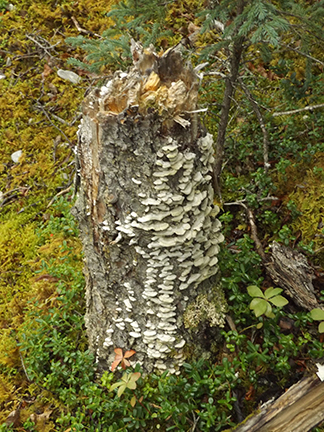 Katmai-National-Park-and-Preserve-mushrooms-on-the-trail